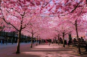 LoveJapan